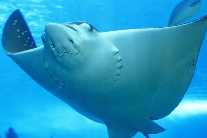 Best Belize Hol Chan Marine Reserve and Shark Ray Alley Snorkel Tour from Ambergris Caye Preview Image