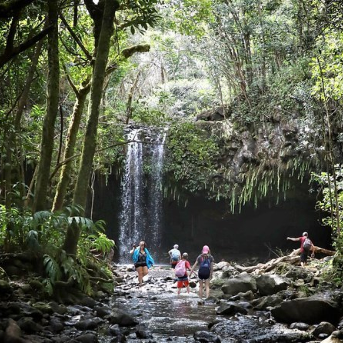 Best East Maui Waterfalls and Rainforest Hike Images