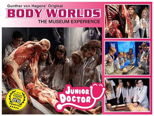 Body Worlds' Junior Doctor Preview Image