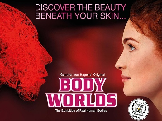 BODY WORLDS London Preview Image