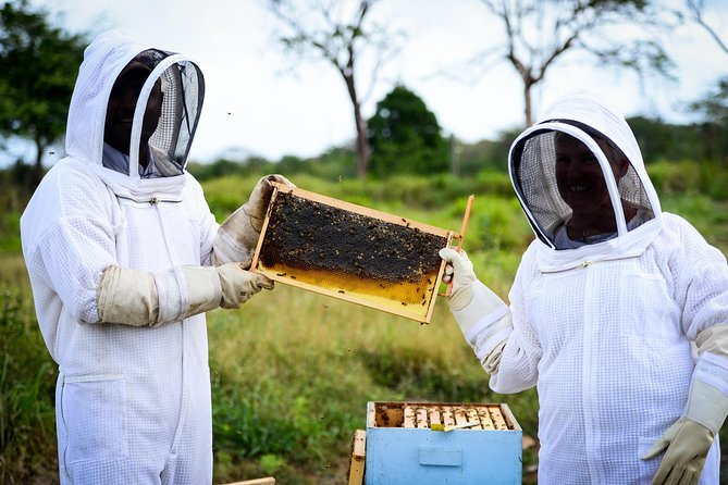 Cayman Honey Beekeeping Adventure Preview Image