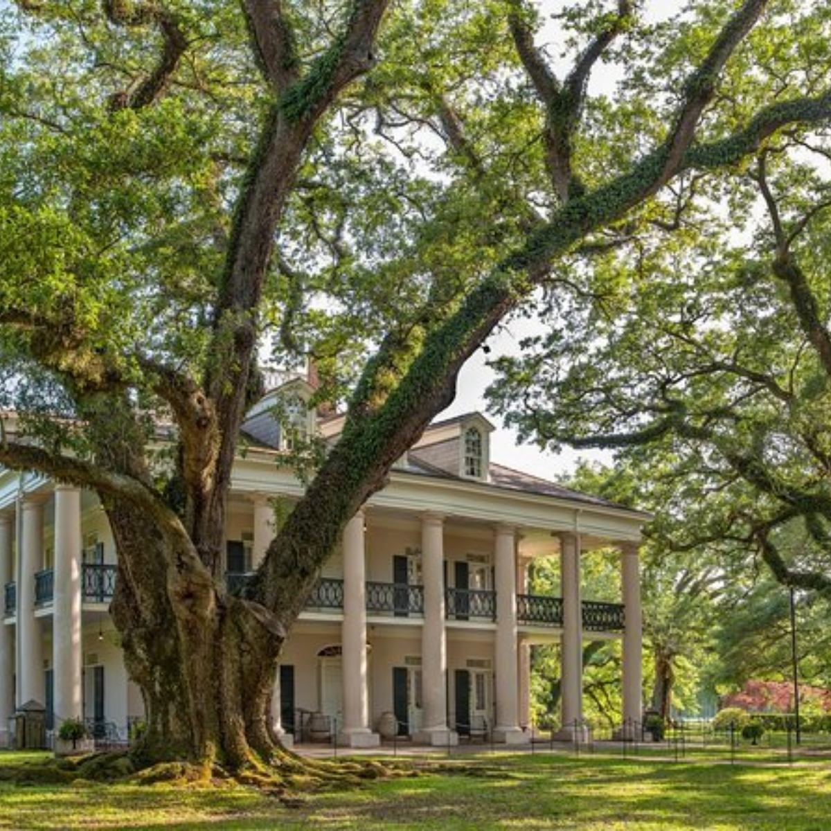 Experience Cajun Country: Swamp Boat Adventure and Plantations Full-Day Tour from New Orleans Images