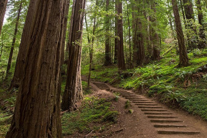 Muir Woods, Giant Redwoods and Sausalito Half-Day Trip Preview Image