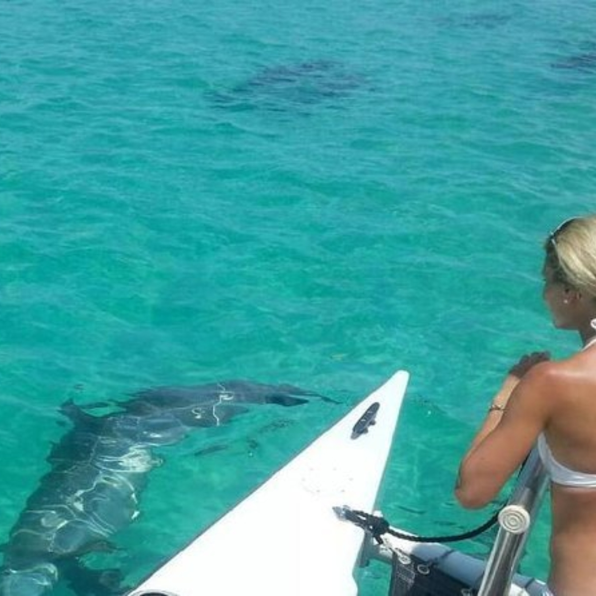 Shipwreck Snorkel and Wild Dolphin Encounter Images