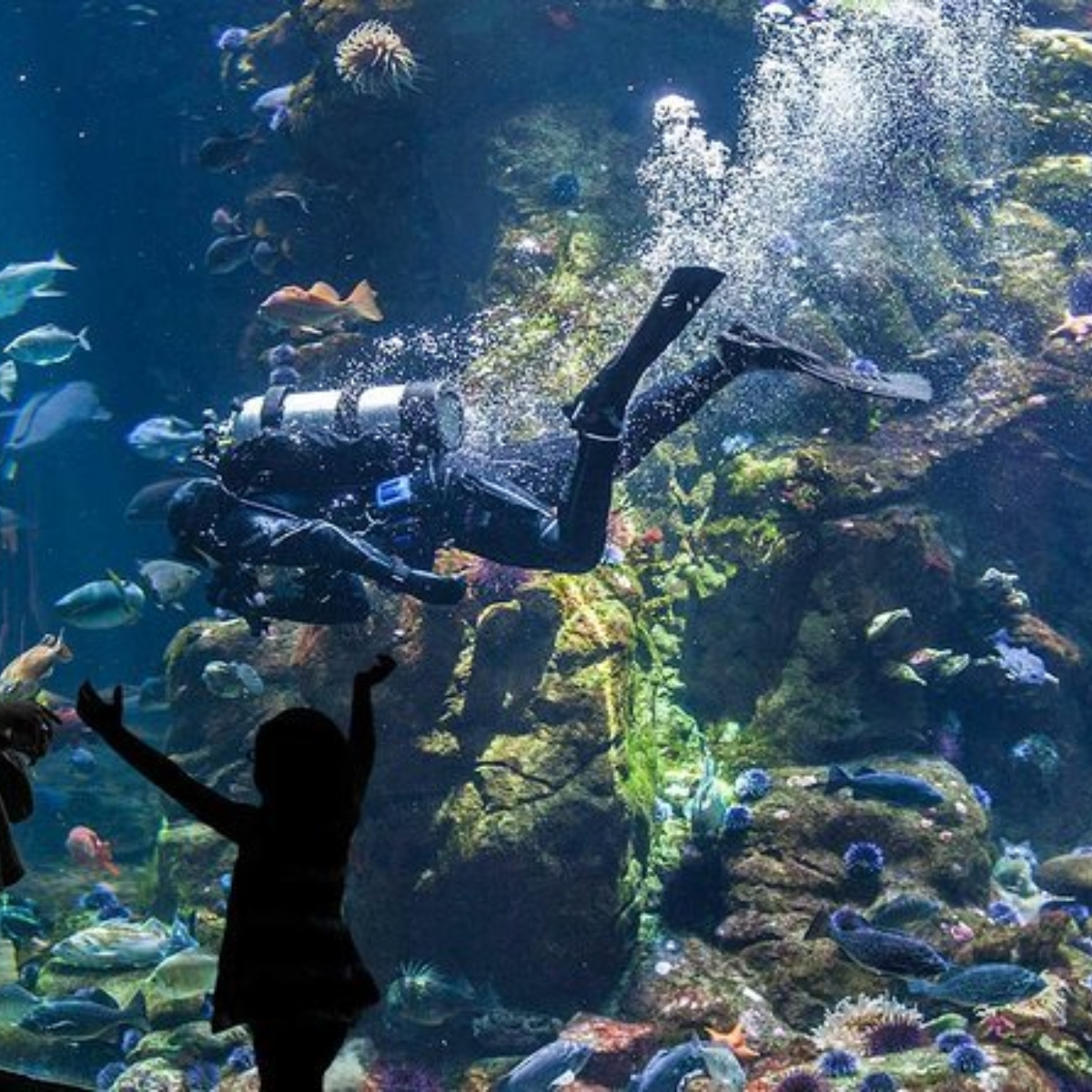 Skip the Line: California Academy of Sciences General Admission Ticket Images