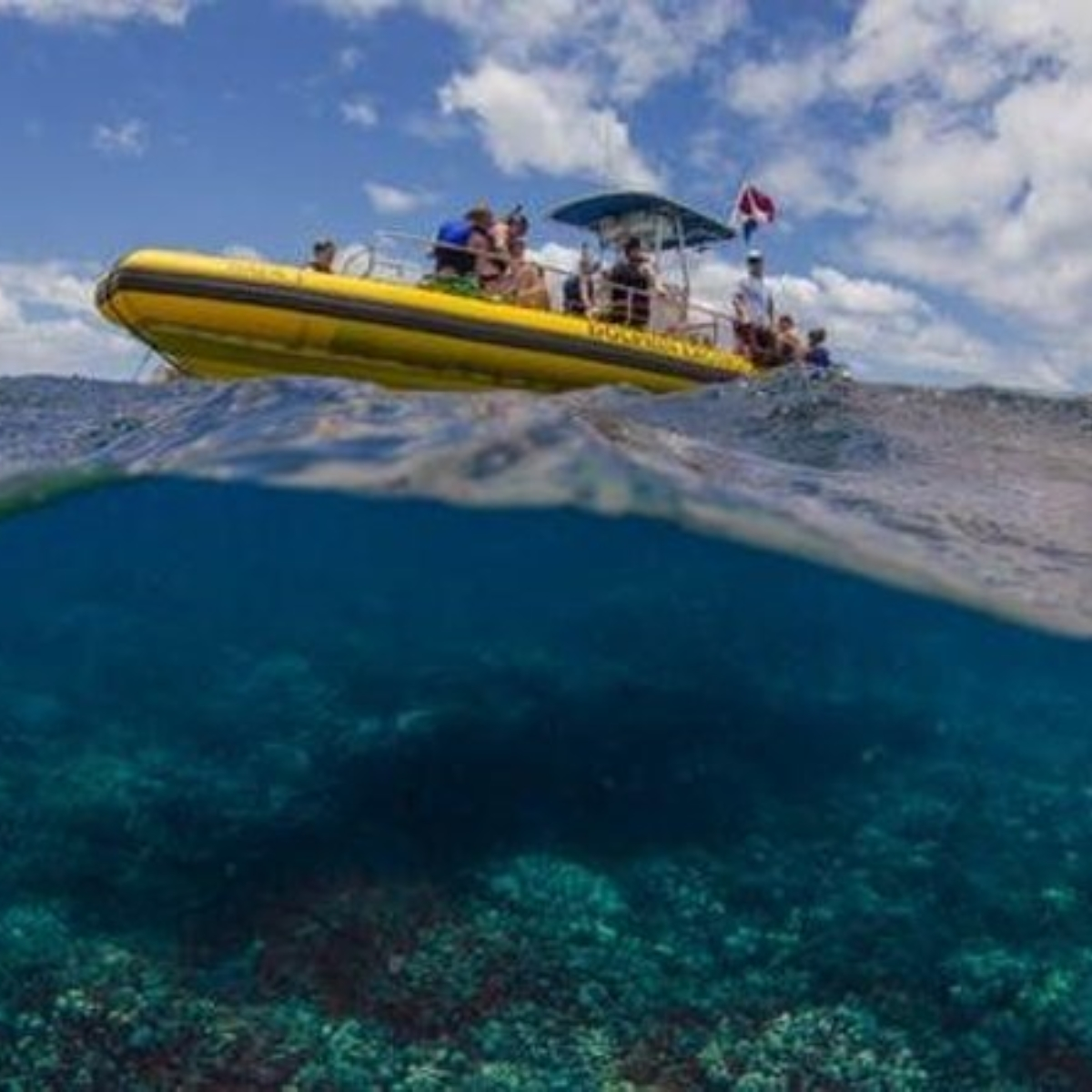 Waianae Coast Snorkel Cruise with Dolphin and Seasonal Whale Watching from Oahu Images