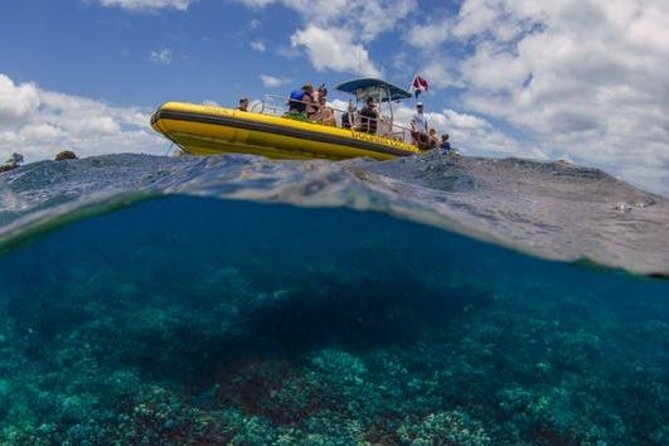 Waianae Coast Snorkel Cruise with Dolphin and Seasonal Whale Watching from Oahu Preview Image